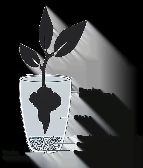 Sadzenie-w-ziemi-na-zewnatrz
